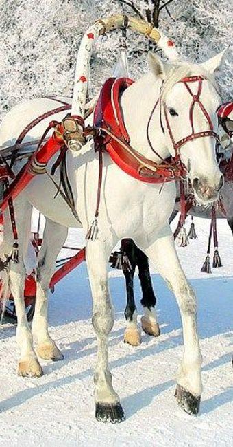 Balade en traîneau à cheval à Saint-Pétersbourg